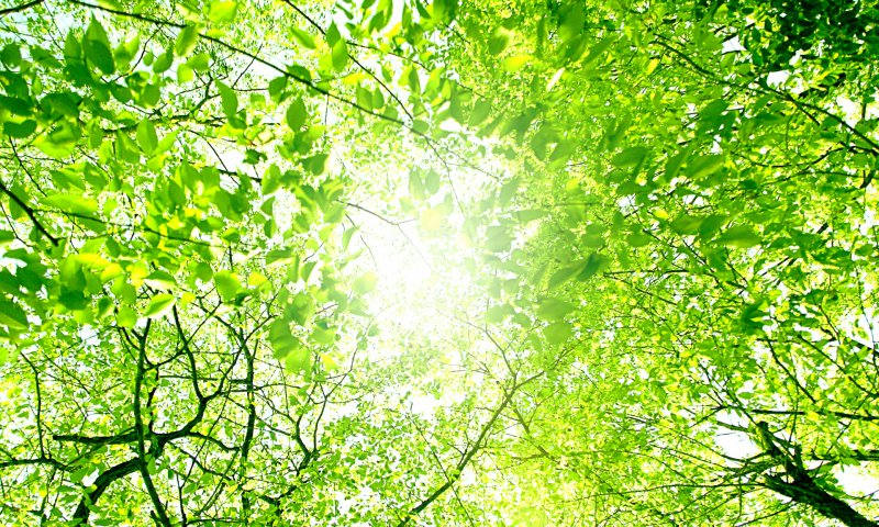 新緑からの木漏れ日