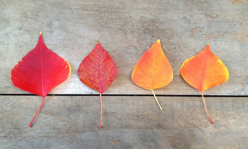 彩り豊かな葉