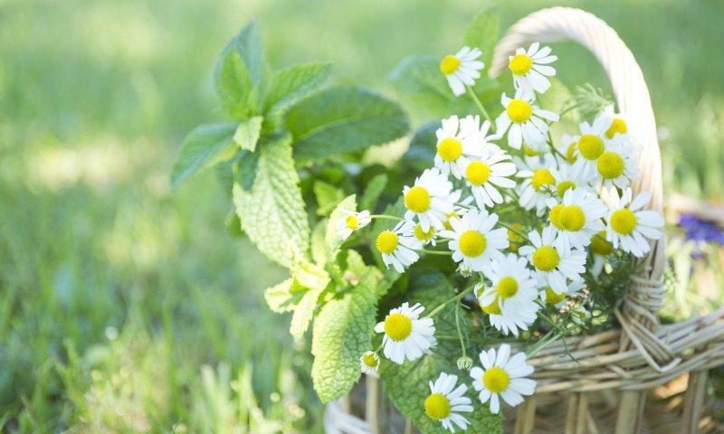 バスケットの中の花