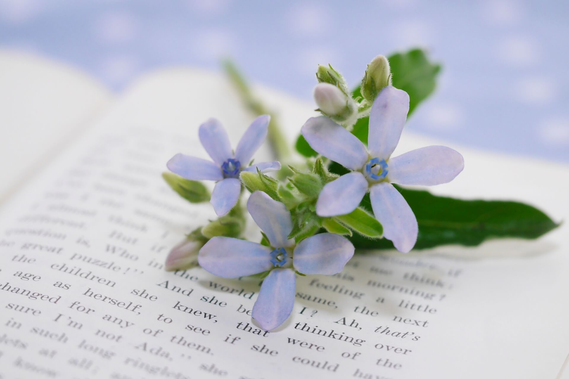 本の上の花