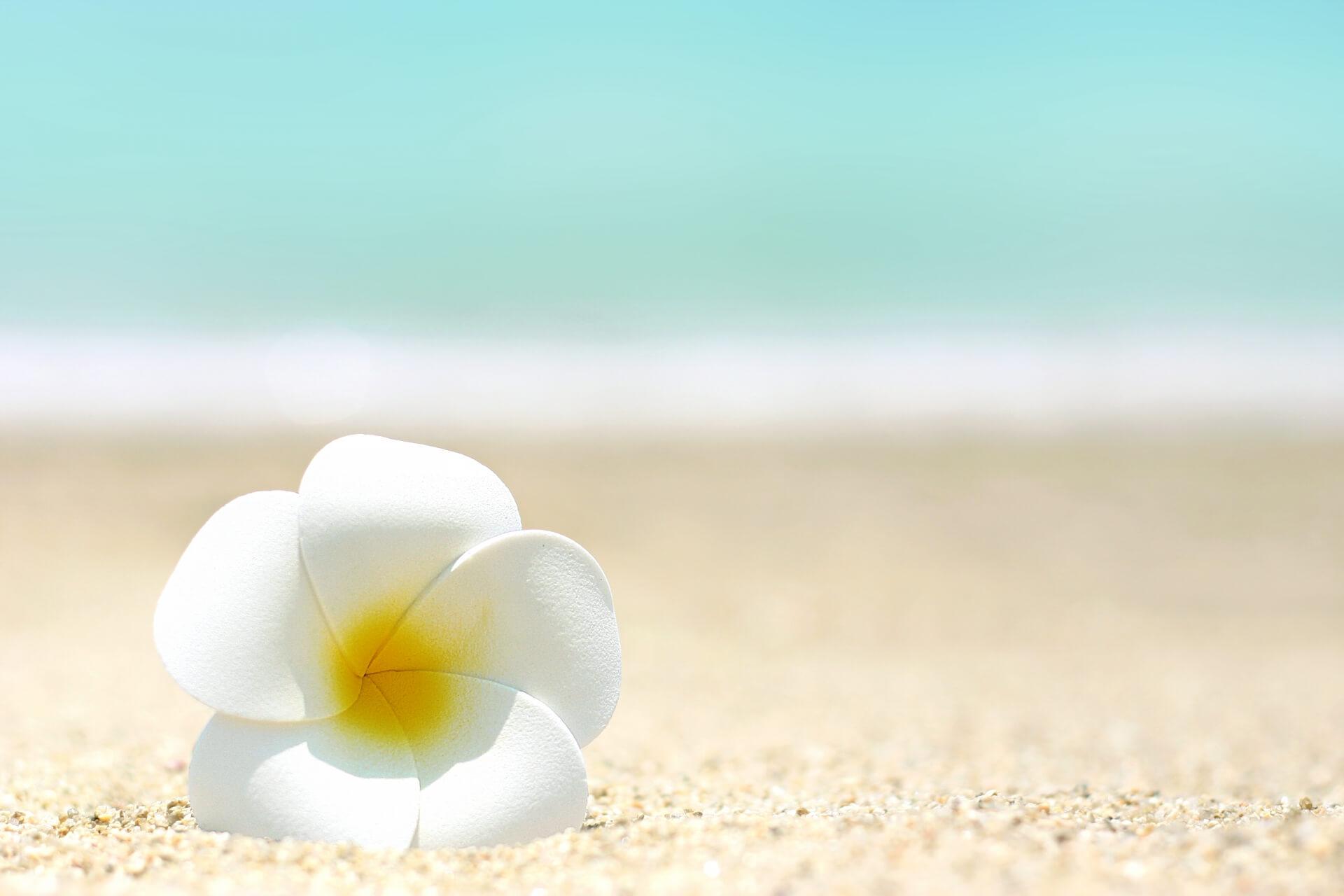 砂浜のブルメリア