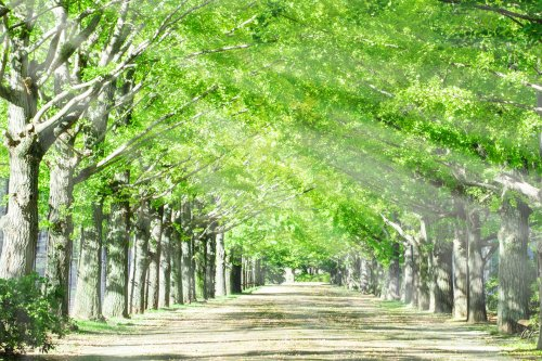 緑の木々の道