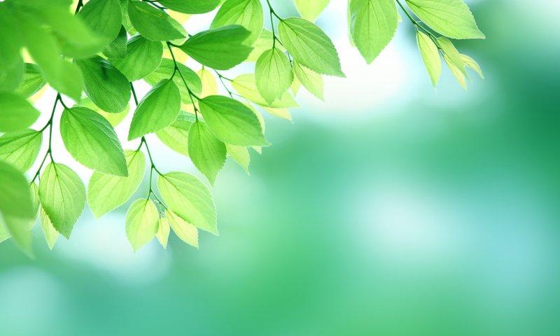 陽に映える葉