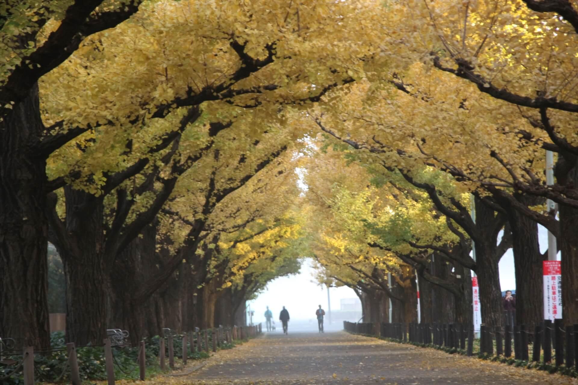 外苑前銀杏並木