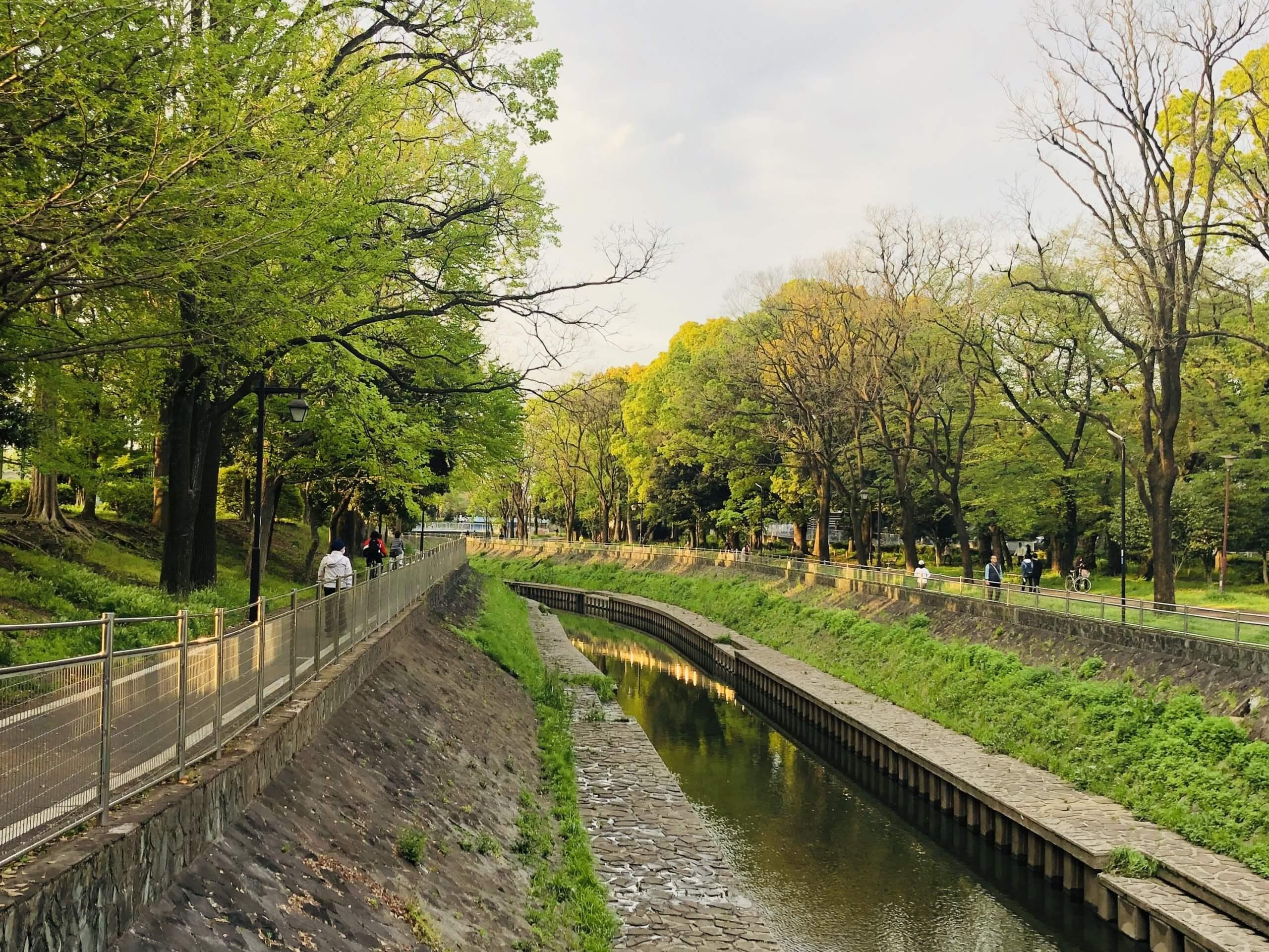 新緑の善福寺川
